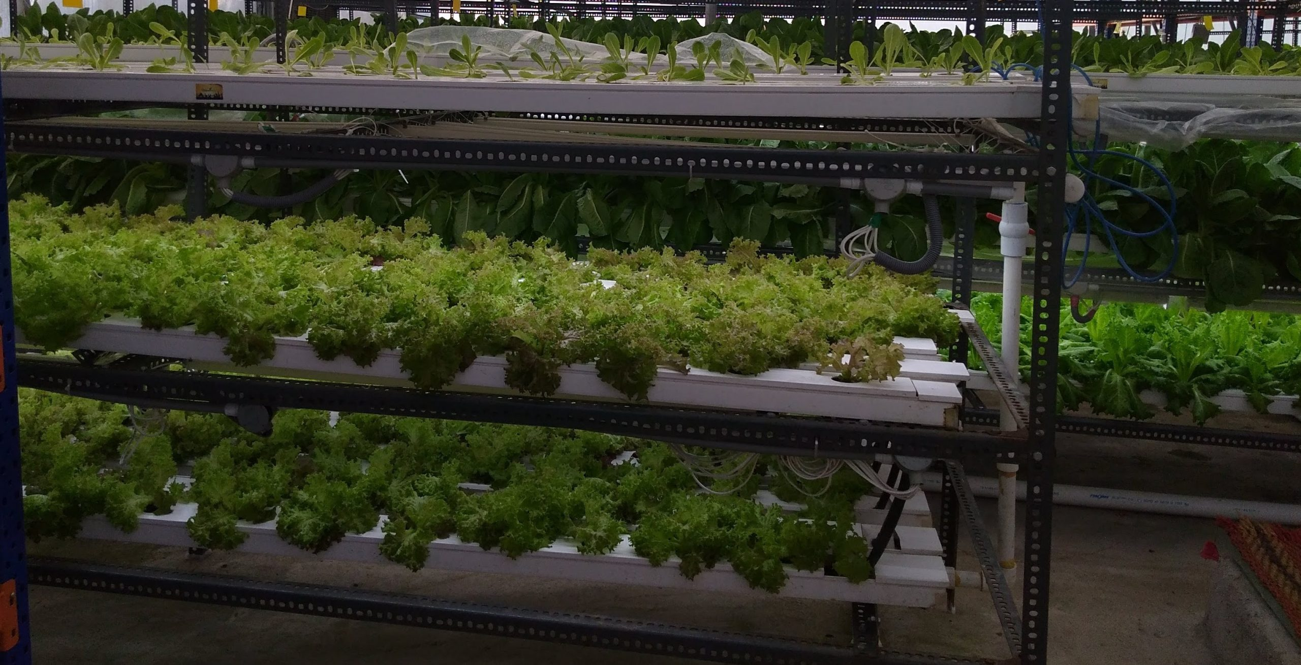 Focus-Sustainable Farming by Hydroponic Farms