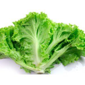 Leafy Iceberg